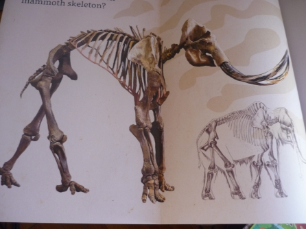 DMol BLangeveld - mammoths inside cover