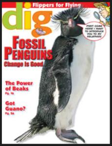Dig Magazine Nov 2013
