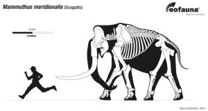 Eofauna - M meridionalis and running paleontologist
