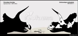 EoFauna - Eotriceratops vs Triceratops