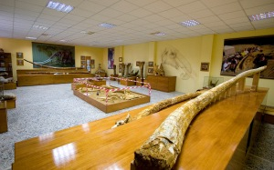 Paleontological Exhibition of Milia
