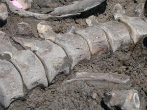 ISM - 2008 Benedict mastodon spine