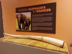 ISM - Elephants