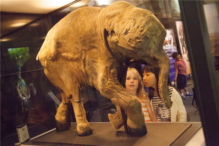 Lyuba Mammoth Natural History Museum