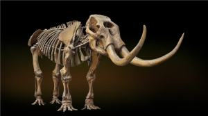 NHM-Mastodon