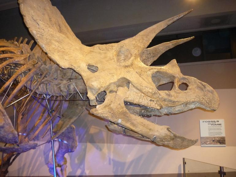 Cliff - triceratops
