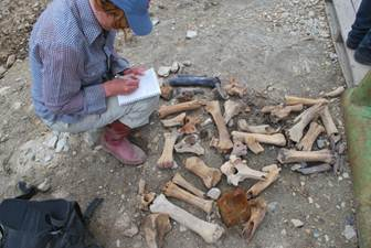 Elizabeth Hall recording a collection of bones at a gold mine