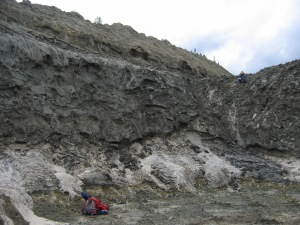 30,000 year old bed of Dawson tephra