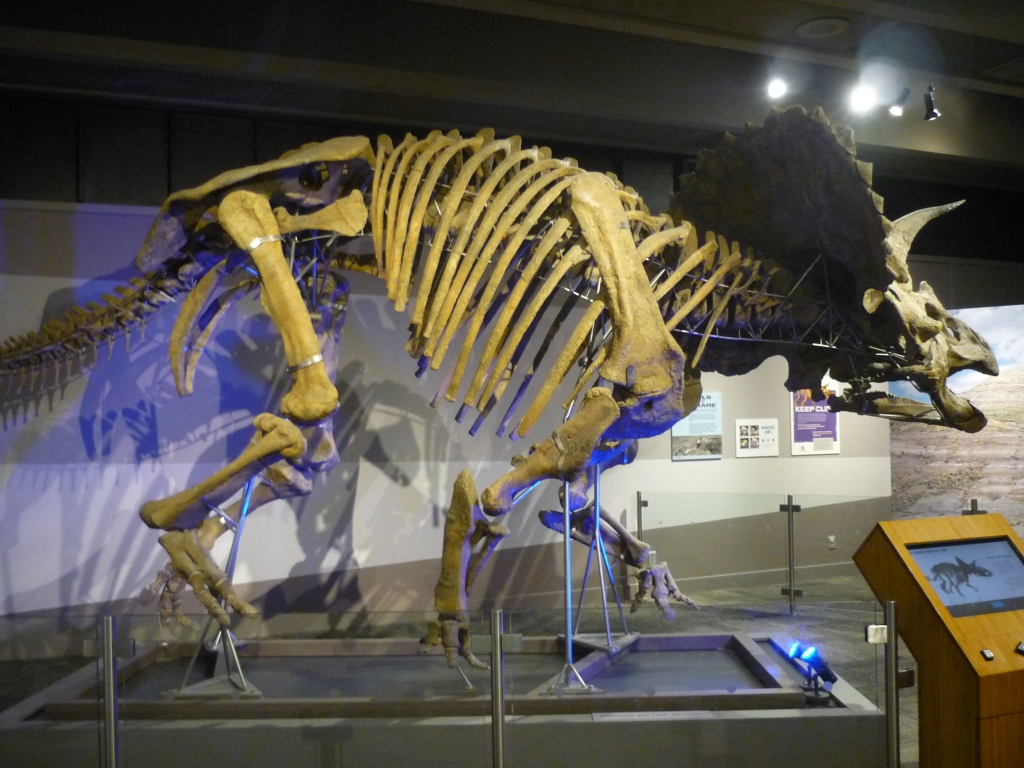 Triceratops Boston Museum of Science