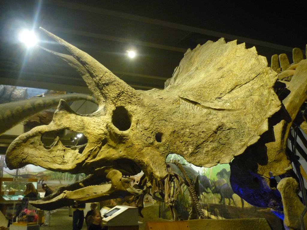 cliff skull & museum
