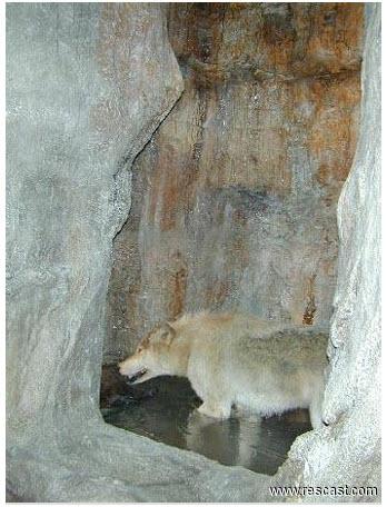 RCI - Dire wolf replica