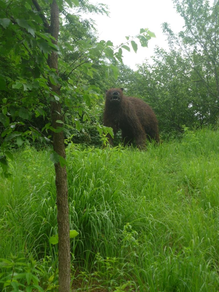 Montshire - bear favorite