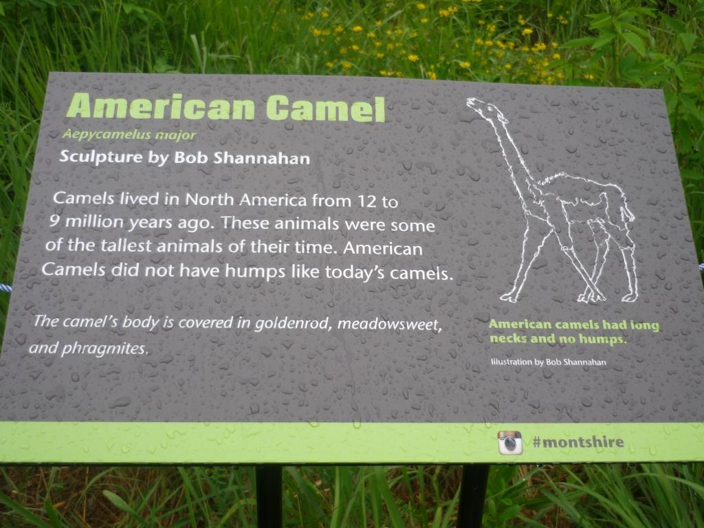 Montshire - camel sign