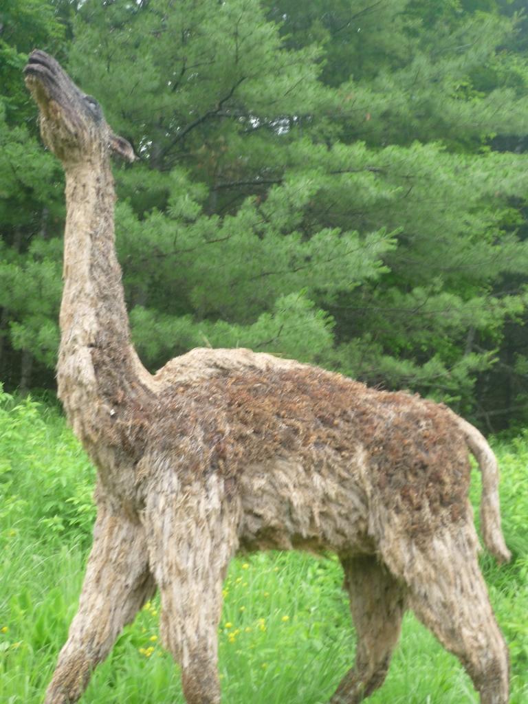 Montshire - camel
