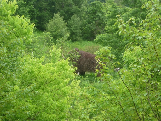 Montshire - mammoth at distance thru trees