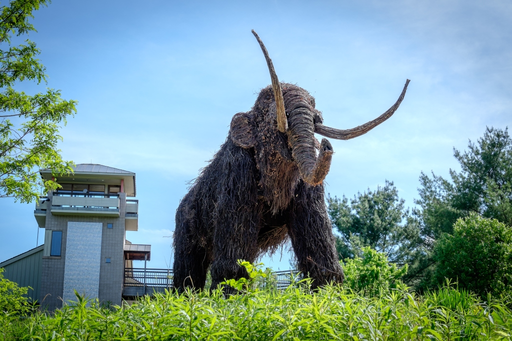 Montshire-Woolly-Mammoth-3