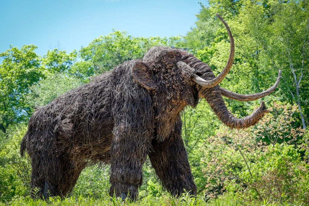 Montshire-Woolly-Mammoth2