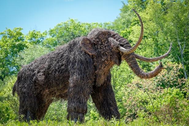 Montshire-Woolly-Mammoth2