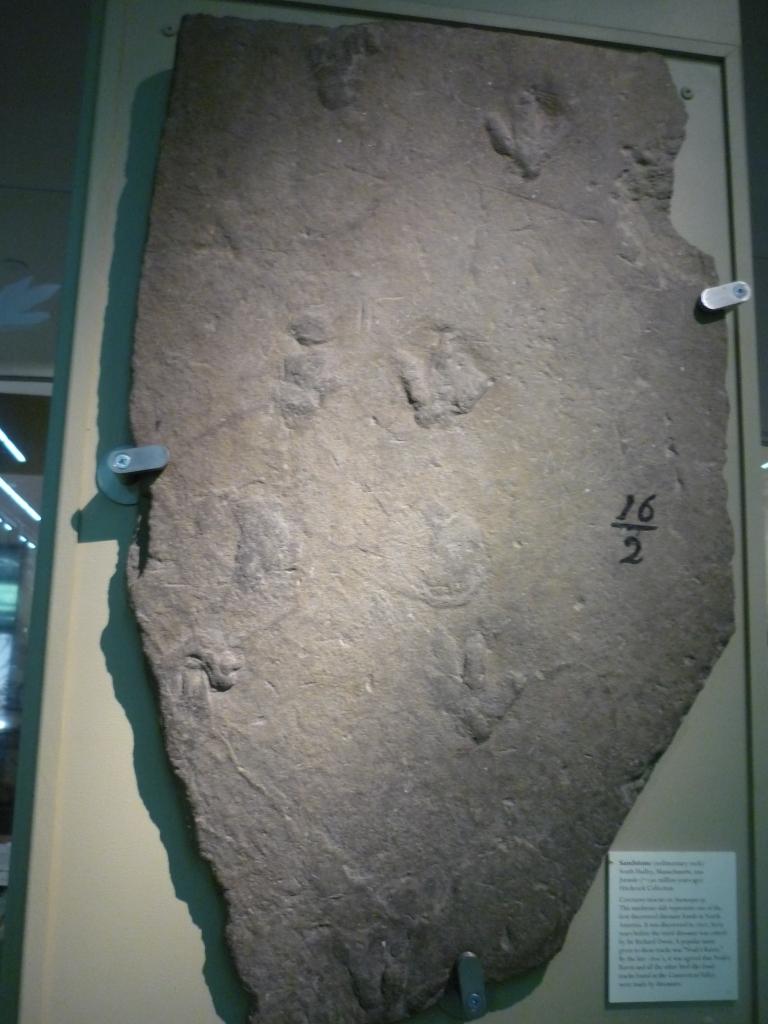 Beneski - 1802 footprints