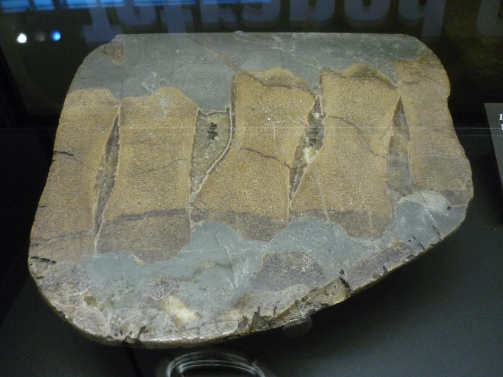 Beneski - great vertebrae from ichthyosaurus