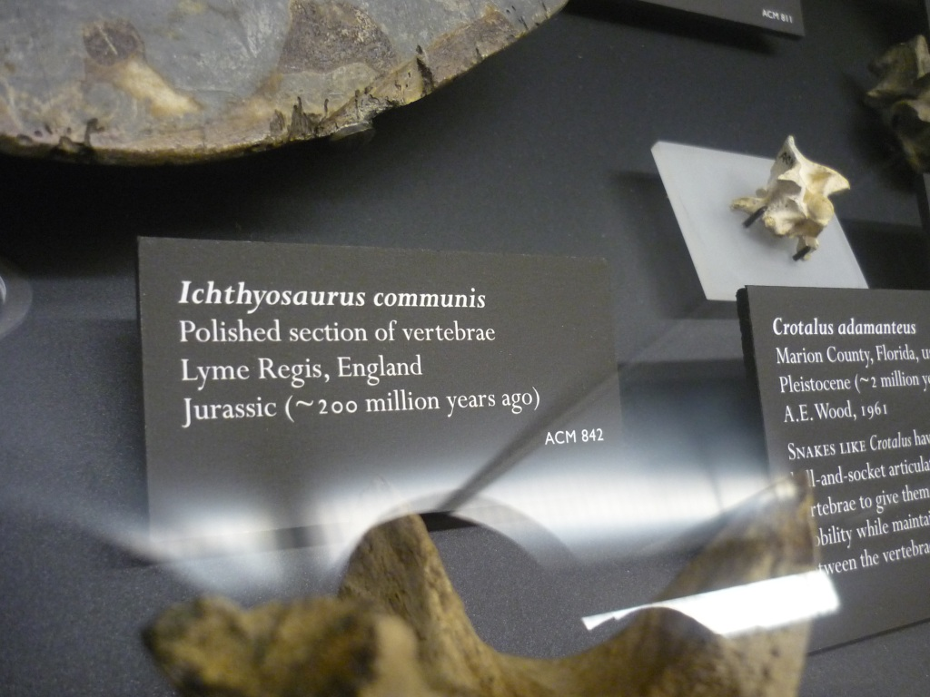 Beneski - great vertebrae ichthyosaurus sign