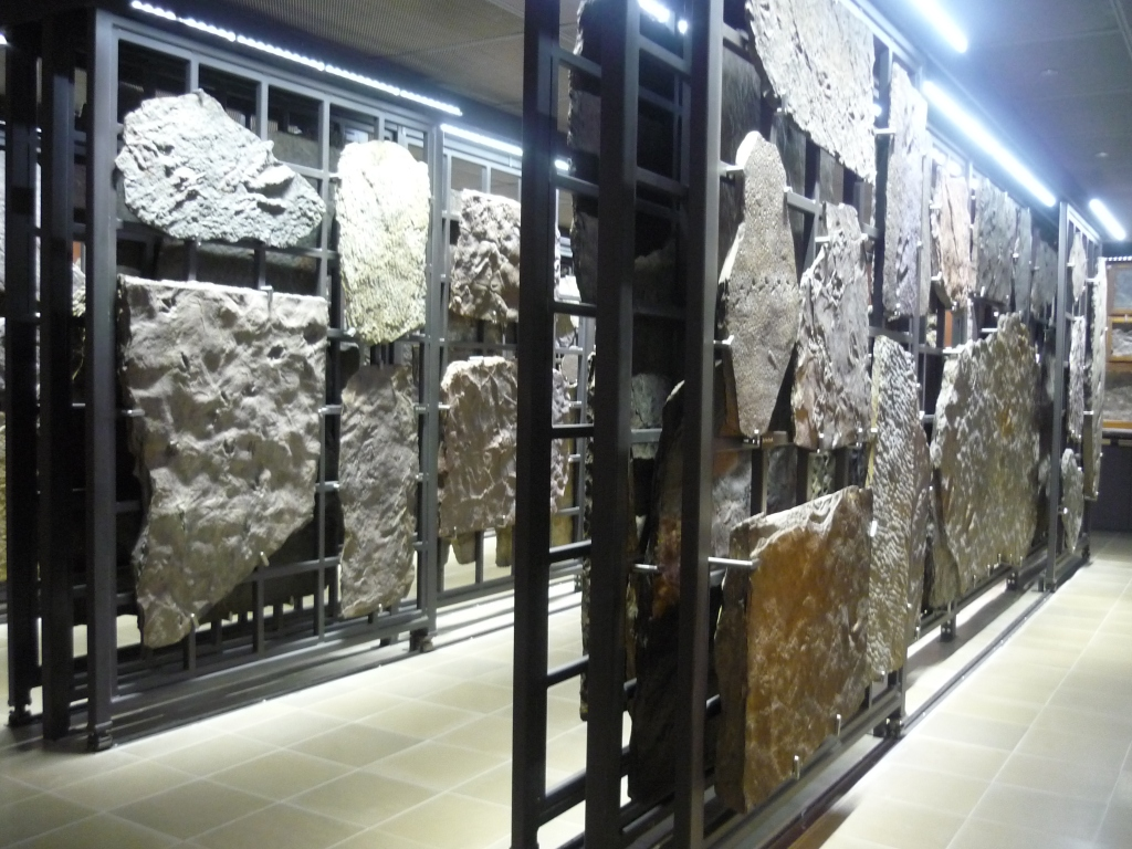 Beneski - racks of Hitchcocks trace fossils