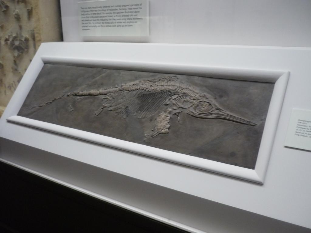 Yale Peabody - Ichthyosaurus
