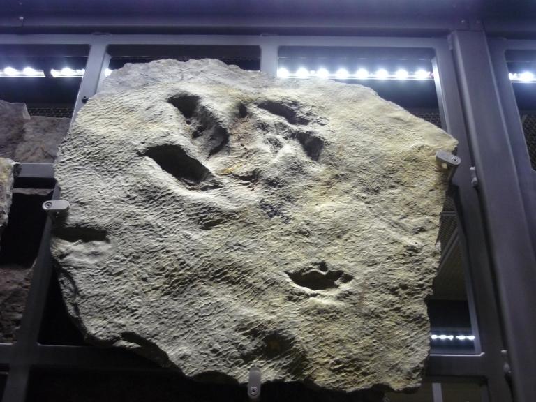 Beneski - footprint on rack of trace fossils