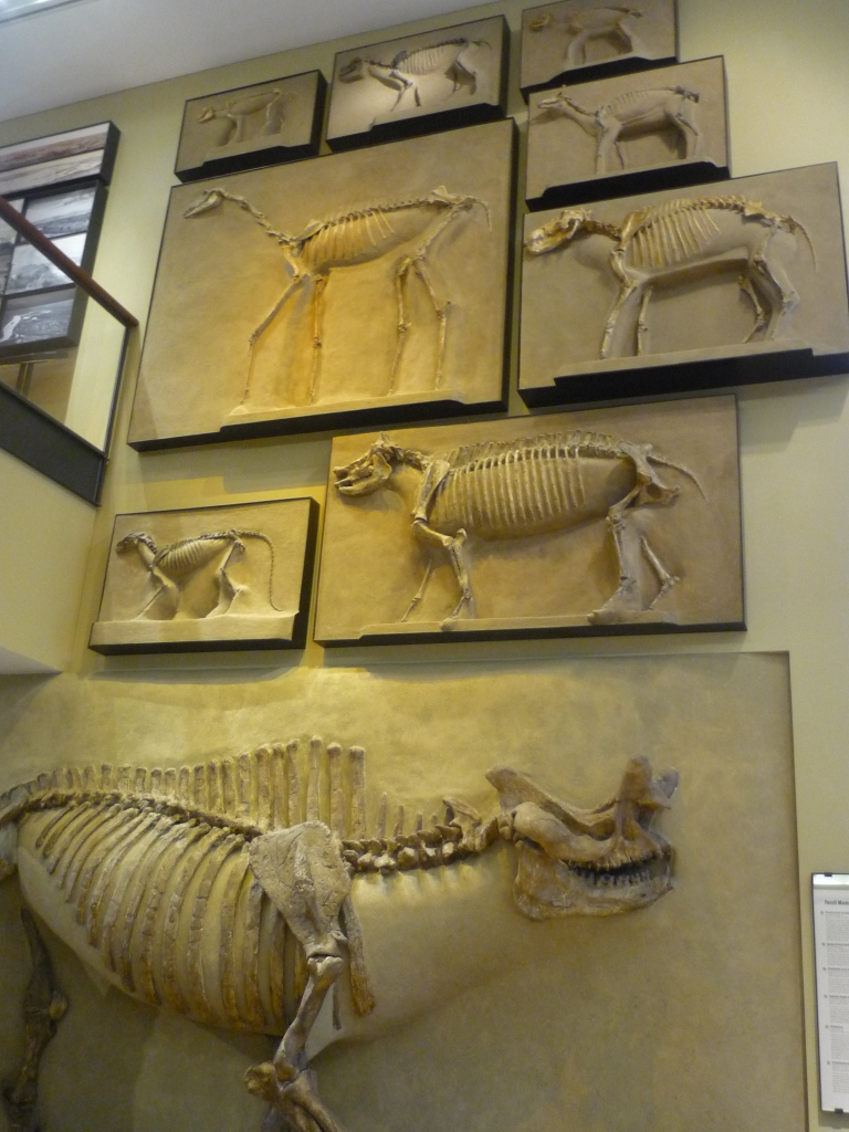 Beneski - Fossil Mammal Wall full great