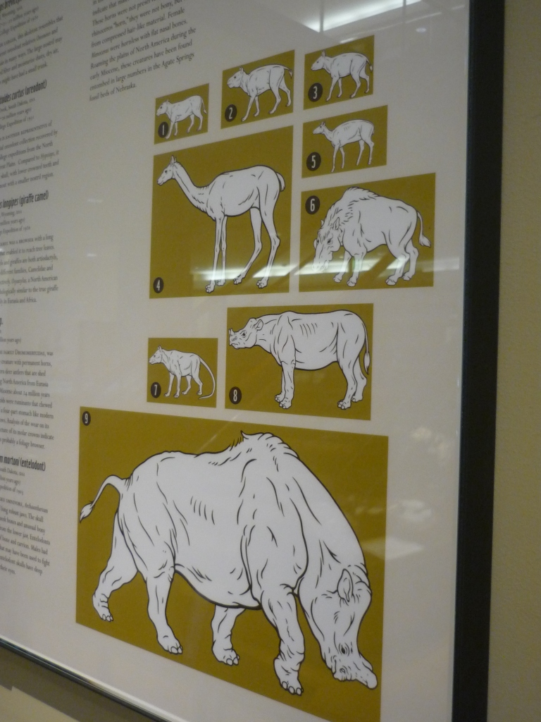 Beneski - Fossil Mammal Wall sign images