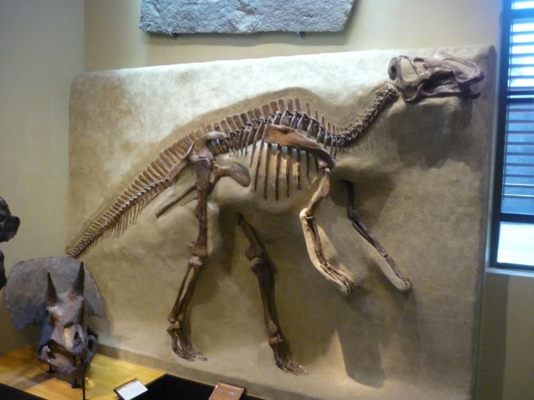 Beneski - gryposaurus - hadrosaur