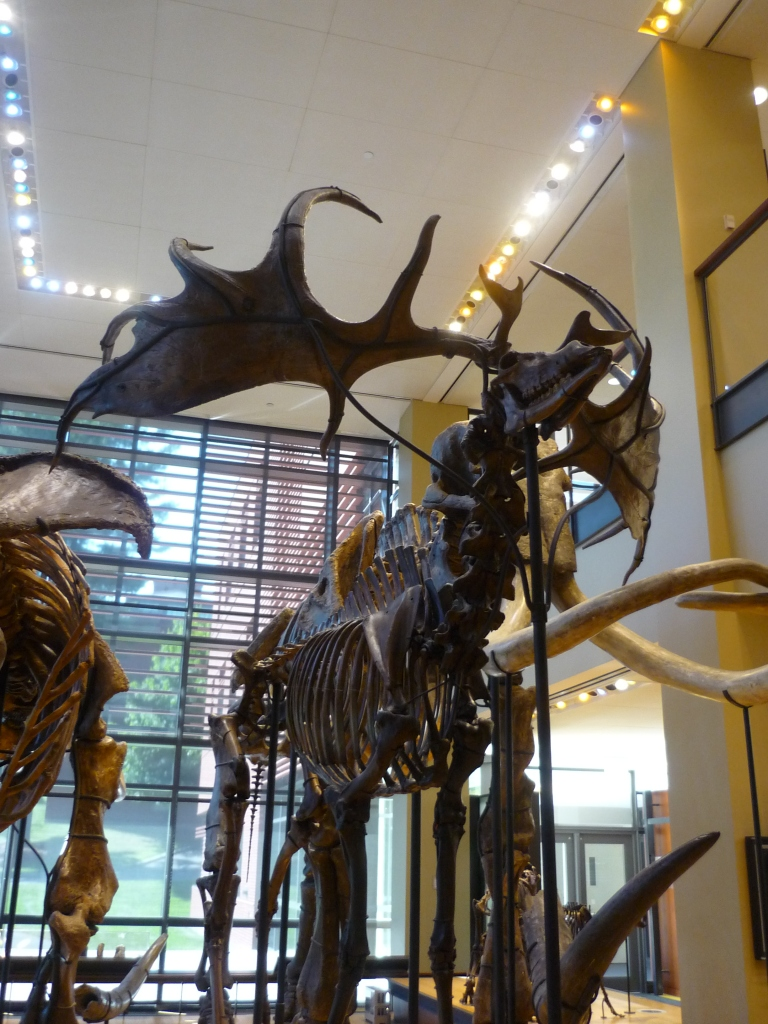 Beneski - Irish elk