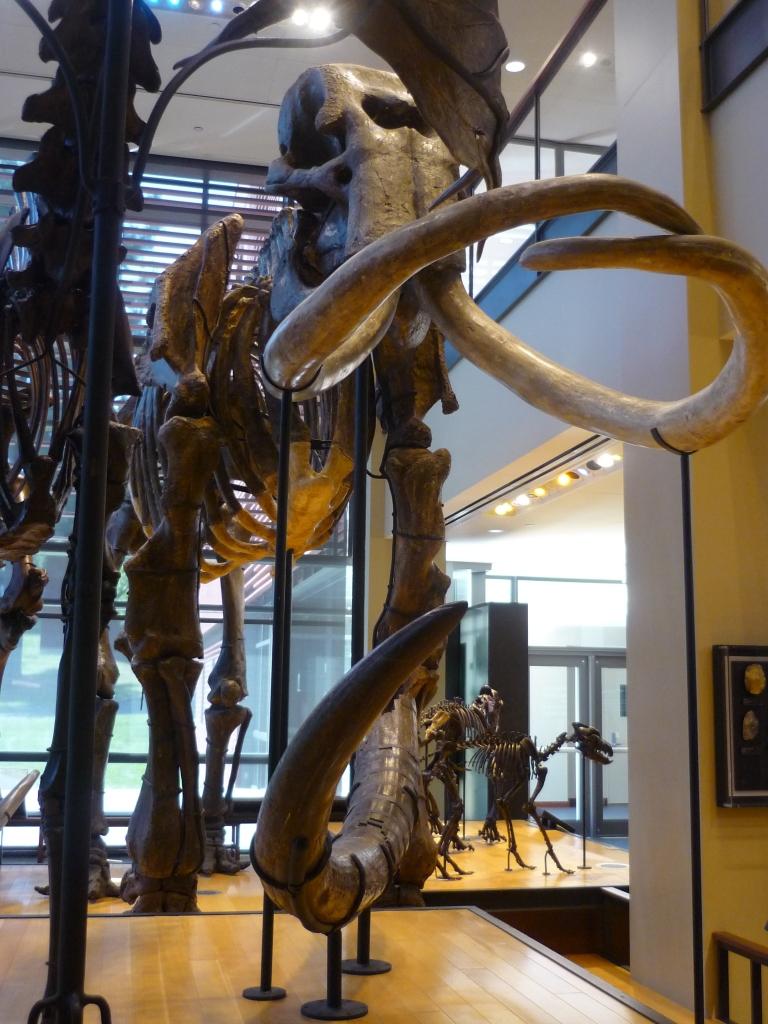 Beneski - mammoth front