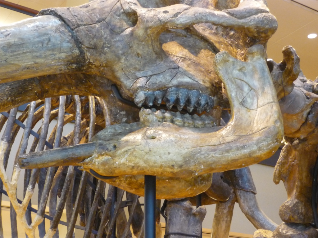 Beneski - mastodon close-up jaw