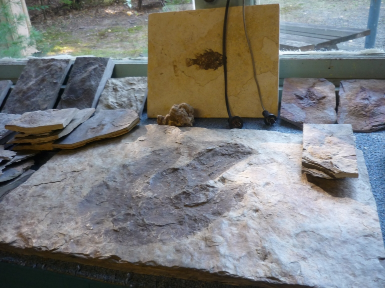 Nash - store footprints and fossil for sale