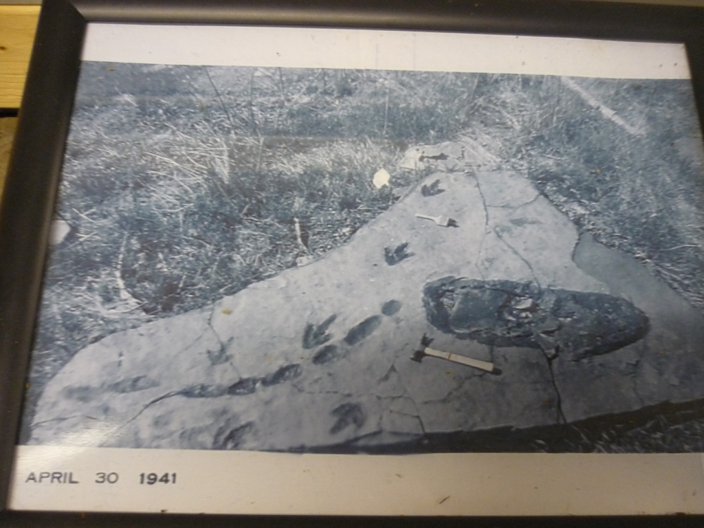 Nash - store picture of how his dad found the footprints and animal lying down