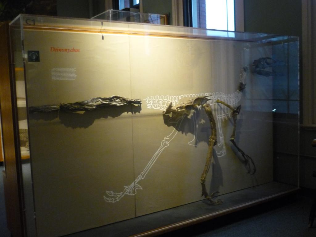 HMNH - Deionychus