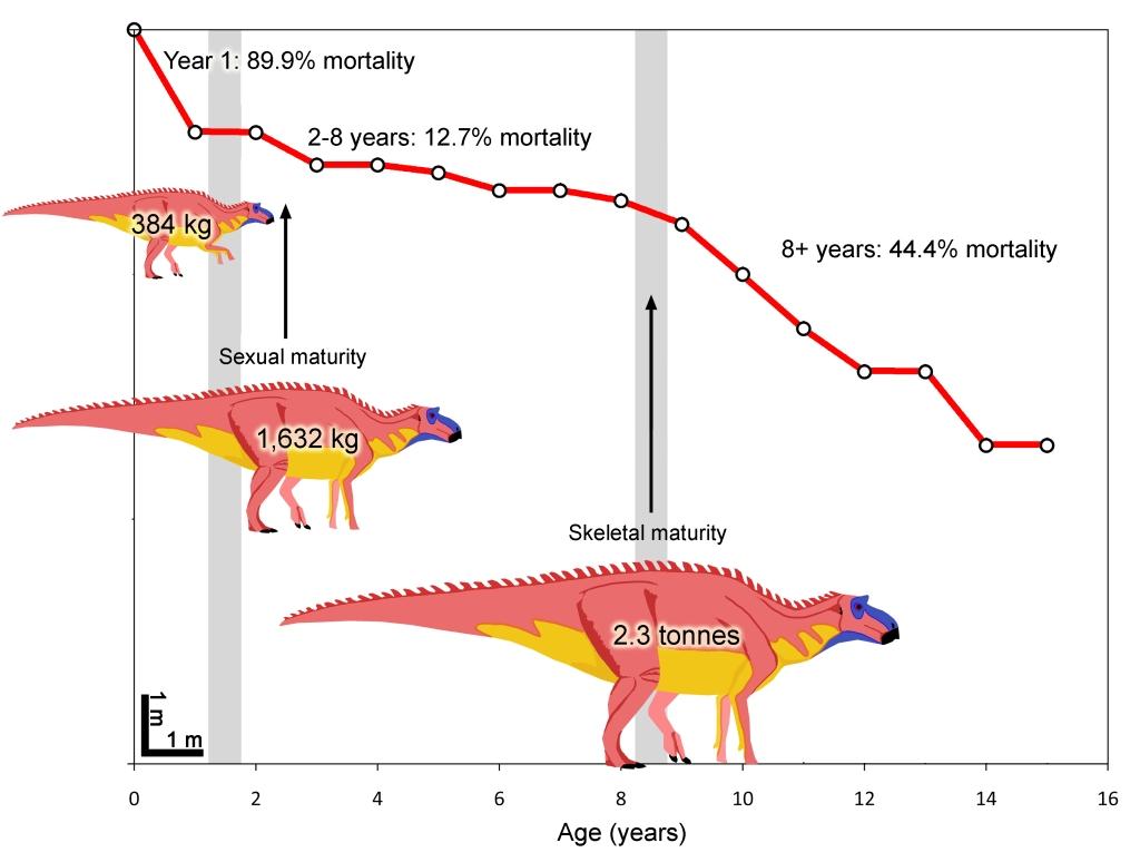 Maiasaura HWB - Maiasaura life history