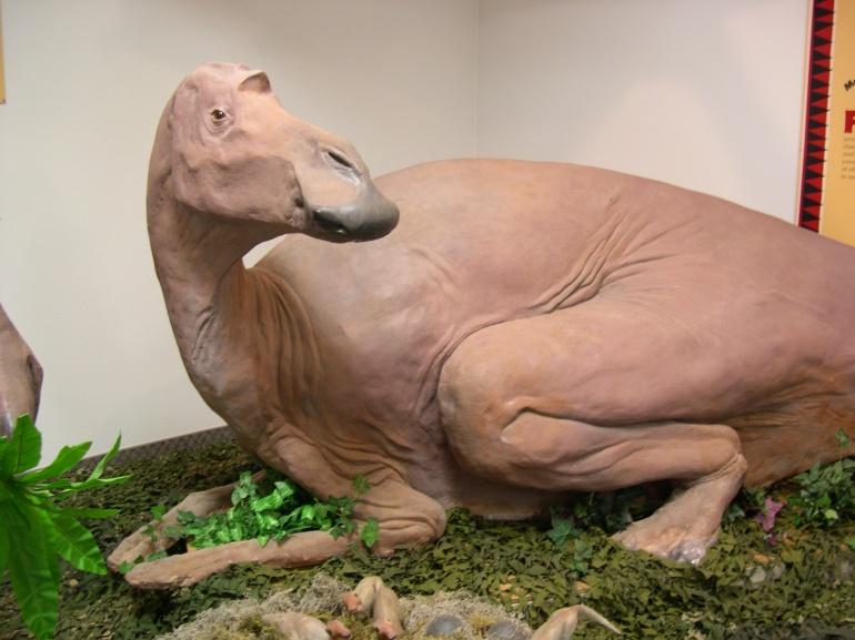 Maiasaura HWB - Maiasaura replica
