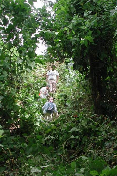 Xibun Archaeological Research Project - walking over a pyramid that has been completely obscured by vegetation