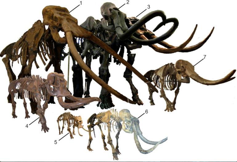 Alexandra van der Geer - shrinking elephants