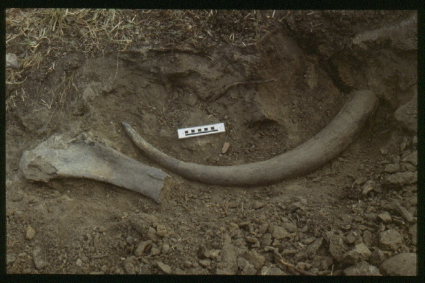 Alexandra van der Geer - Flores-excavation-31-stegodon-florensis