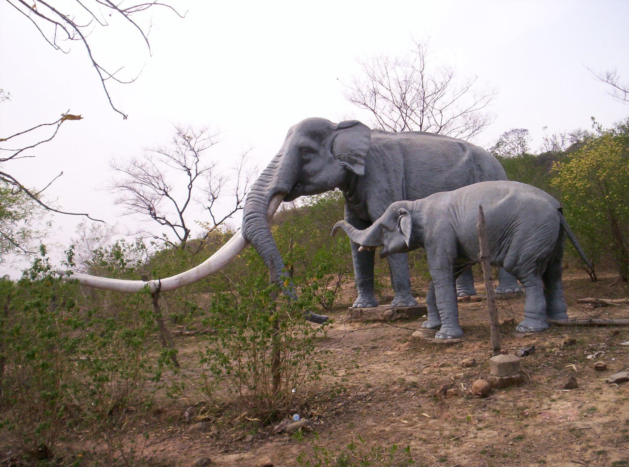 the four tusked elephant