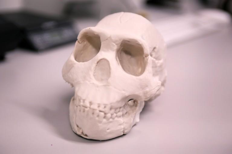 Maker Bot Fossils By Monica Bradburn
