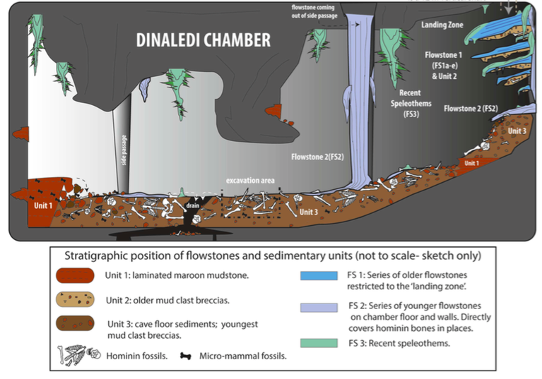 Dinaledi Chamber Illustration