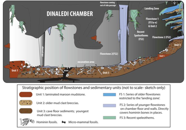 Dinaledi Chamber Illustration