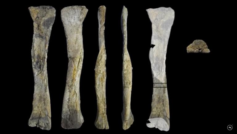 Sousatitan fossil from Colecionadores de Ossos video