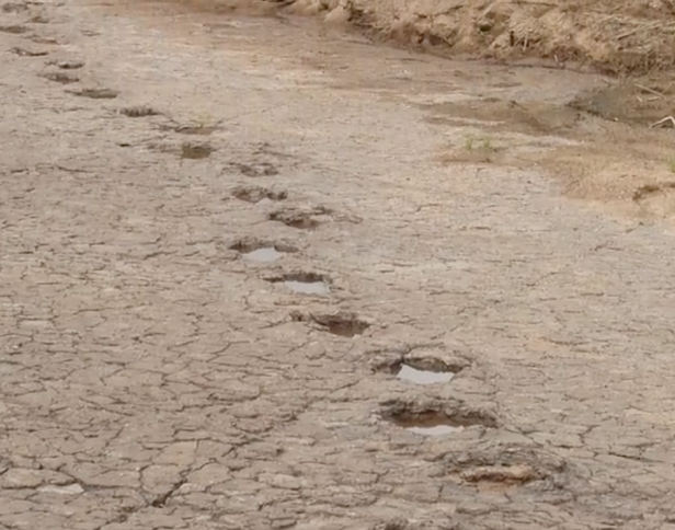 Trackway from Bone Collectors Video - Brazil