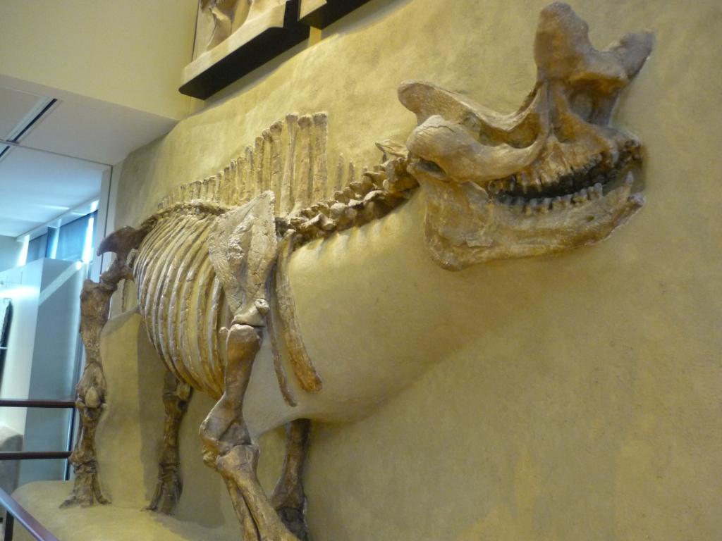 beneski-brontops-tyleri-brontothere-view-from-skull