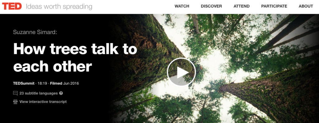 How Trees Talk to Each Other - Dr. Suzanne Simard TED